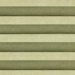 574 - Bonsai