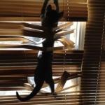 cat-vs-blinds